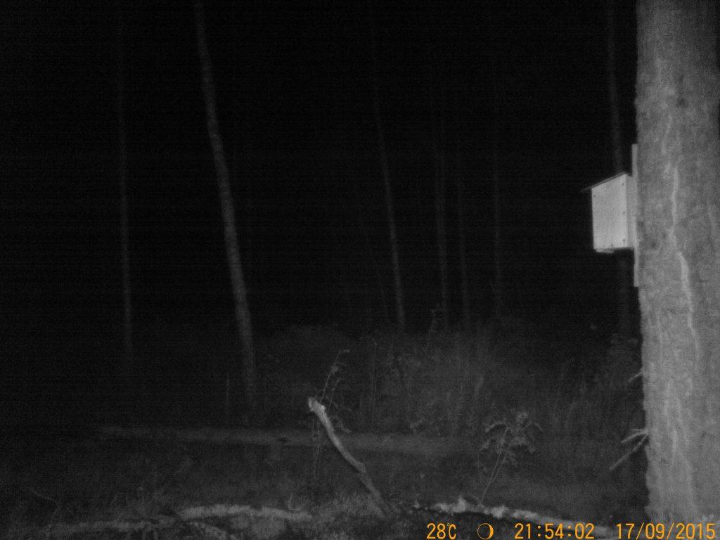 Bild tagen i beckmörker med Diel HT-002LIM GSM
