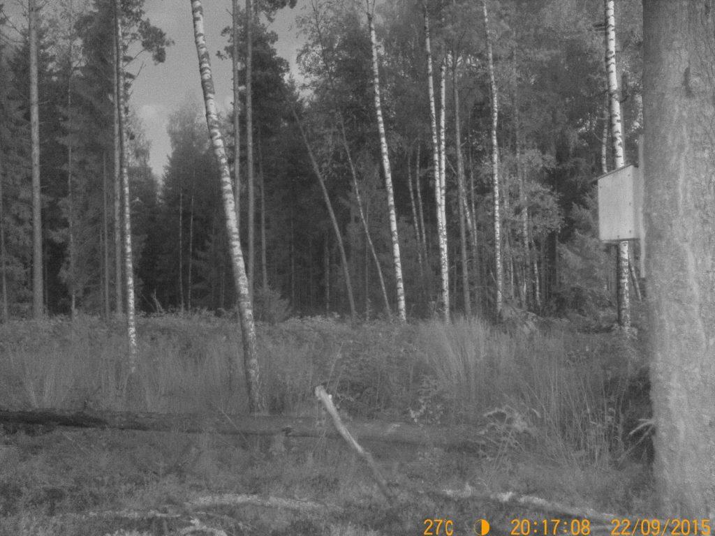 Bild tagen i skymning med Diel HT-002LIM GSM