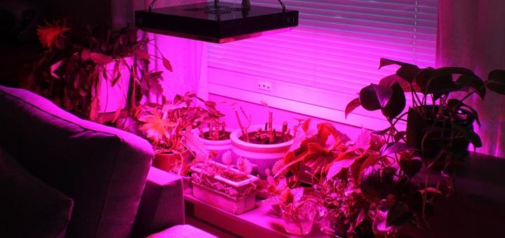 Solaris Agrolex LED 150W är ljusstark!