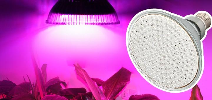 Arvostelussa 10 W LED-kasvivalo – Iso harppaus kohti kevättä