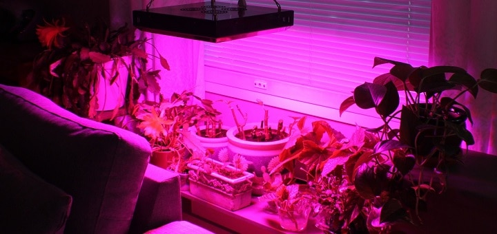 Kasvivalo vaativan kotipuutarhurin testissä – Solaris Agrolex LED 150W