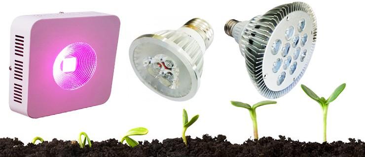 LED-kasvivalo – Toimiiko se ja jos kyllä, niin miten?