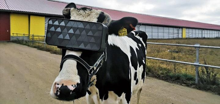 Arla ja e-ville yhteistyöhön paremman maidon puolesta