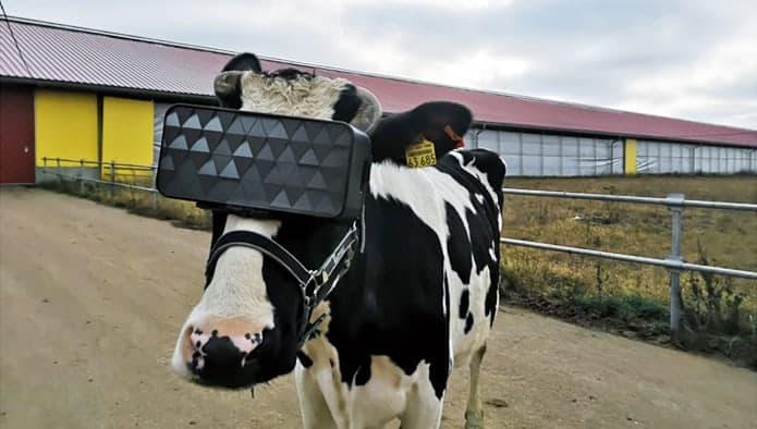 VR-lehmä