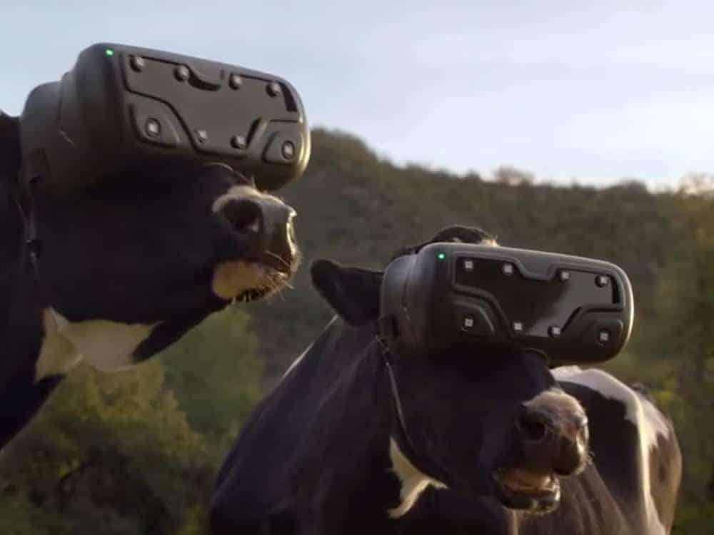 Onko VR myös lehmien tulevaisuus?